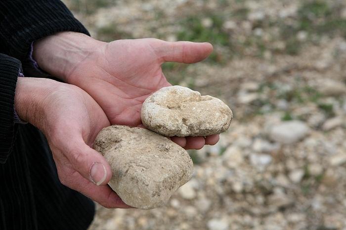 Vacqueyras 의 포도밭 모습 토양 (6).jpg