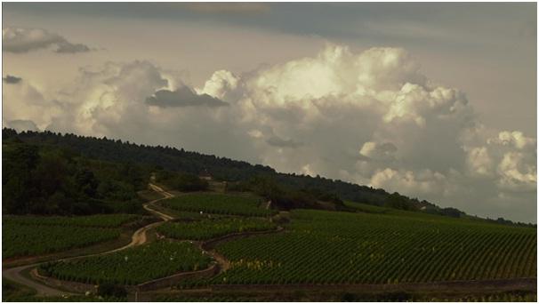 wineok 1.jpg