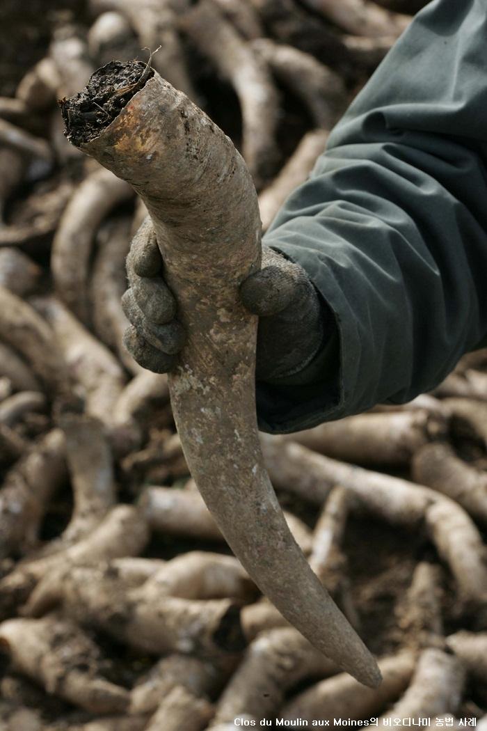 비오디나미 농법.jpg