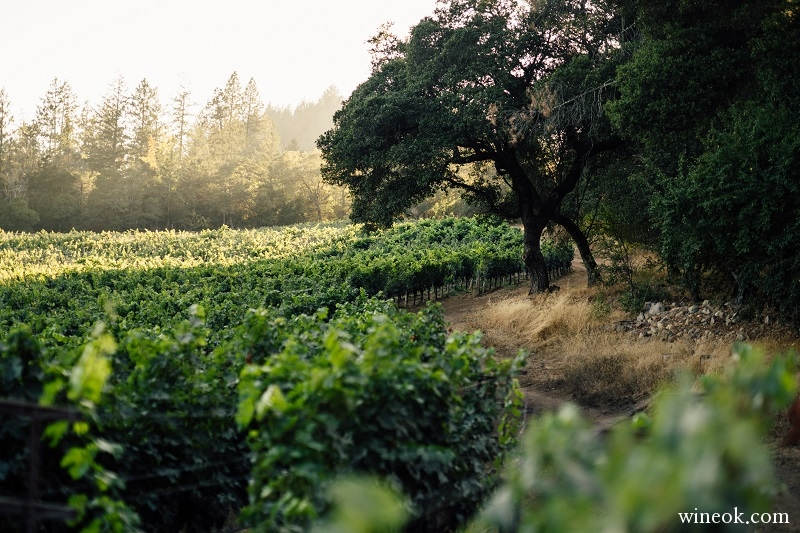 Linda Falls Vineyard Howell Mountain.jpg